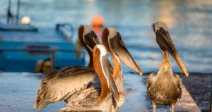 Oiseaux sur le marché aux poissons