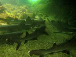 Des requins !